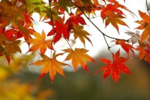fall_leaves_1_.jpg